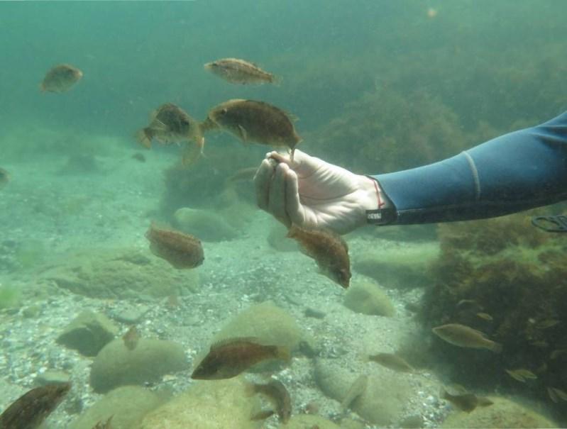 Отдых в Болгарии - кормление рыбок