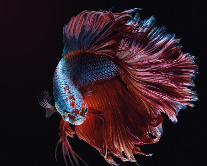 Tikkurila Endangered Colours