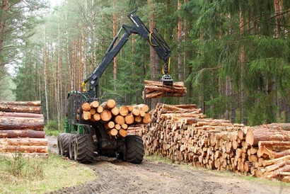 Техника для лесозаготовки