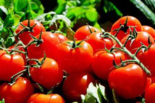 выставка фруктов