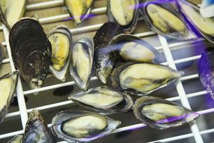 дистрибьюторы рыбы и морепродуктов