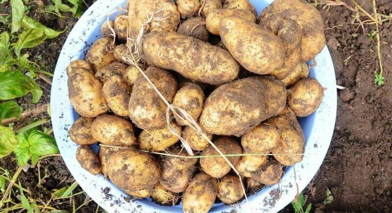 средства защиты картофеля, выставка ЮГАГРО