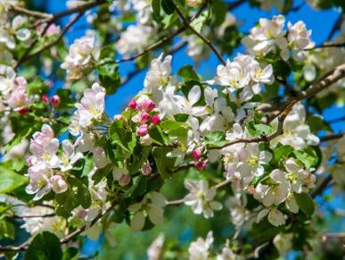 щелково агрохим защиты садовых культур