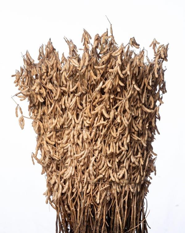 Сельскохозяйственная выставка ЮГАГРО семена сои
